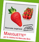 Mariguette